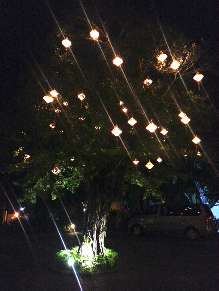 TreeLanterns